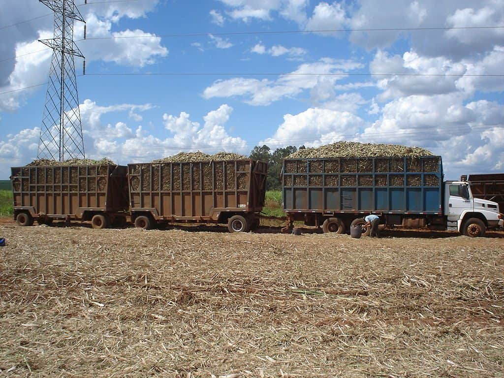 Brazilian Farmers Load Their Trucks with Sugarcane