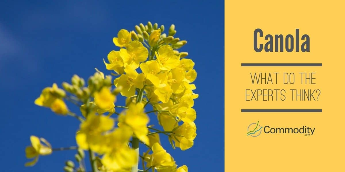 Canola - what do the experts think?