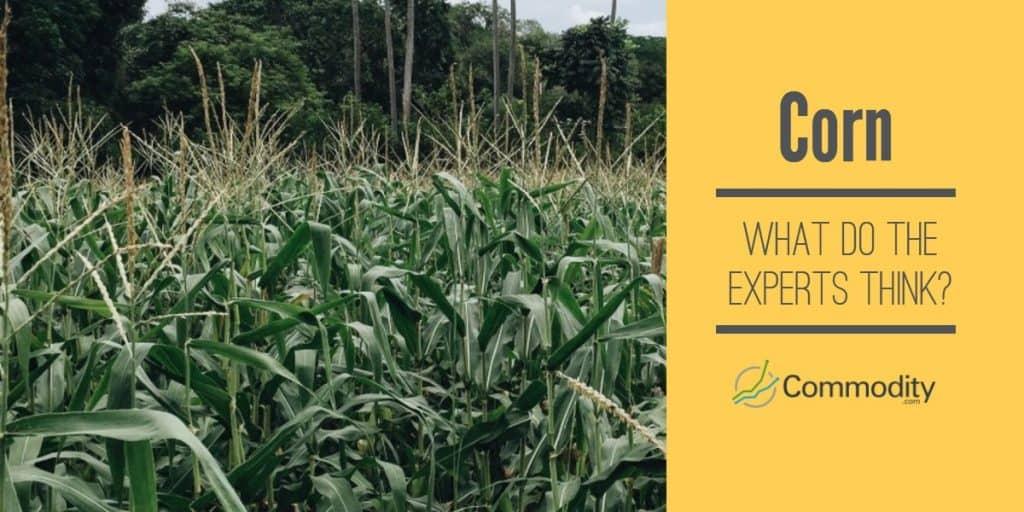 Corn Experts