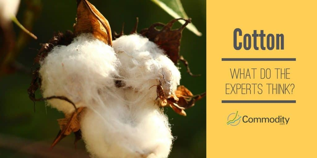 Cotton Experts