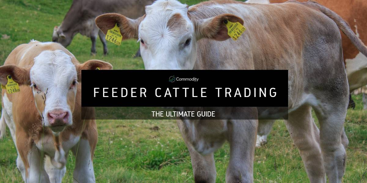 Feeder Cattle: Learn How To Trade Agricultural Commodities at