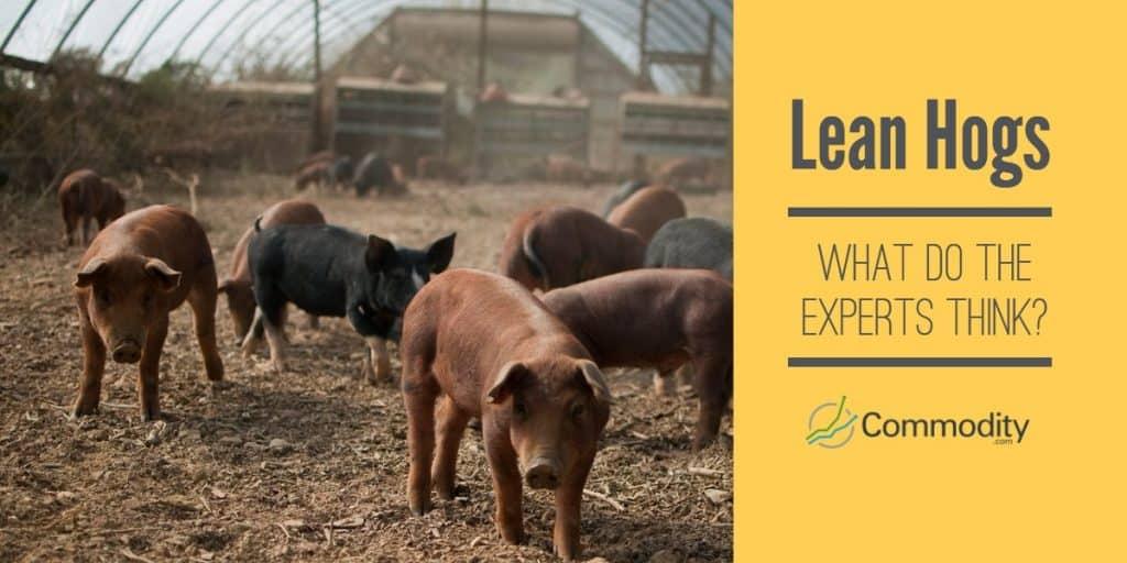 Lean Hog Experts