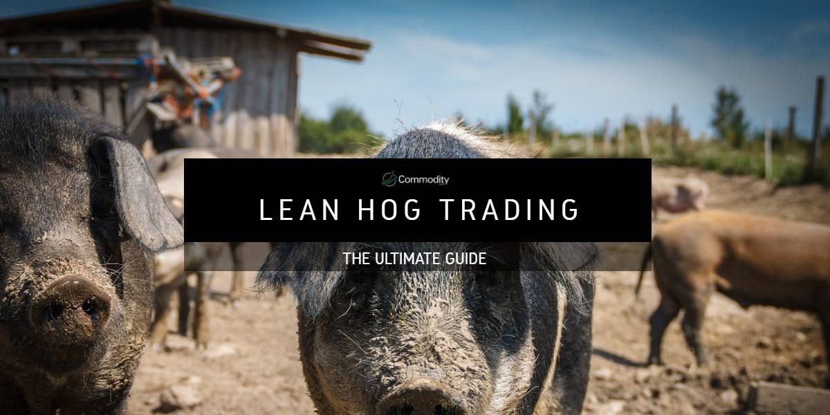 Lean Hogs: Learn How To Trade at Commodity.com
