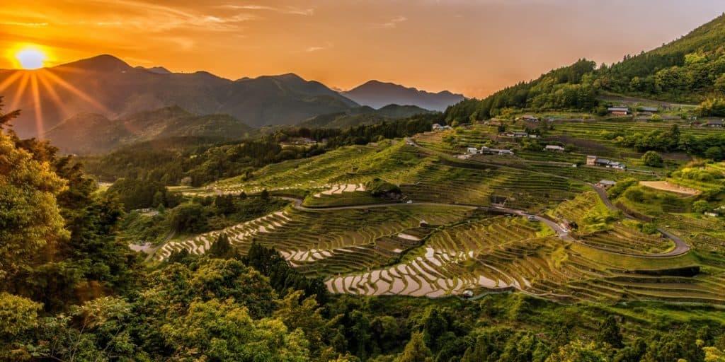 rice paddy irrigation via pixabay