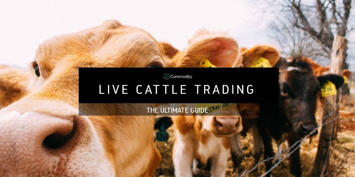 Live Cattle: Learn How To Trade It at Commodity com