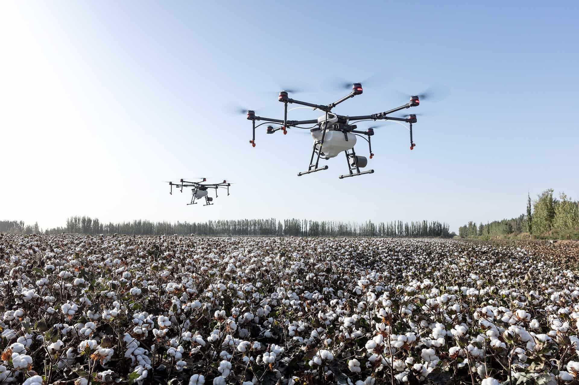 Cotton field being watered by drones