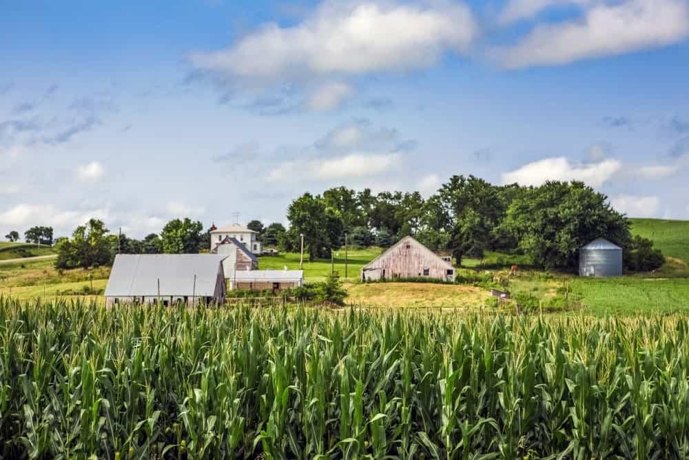 Iowa Agriculture