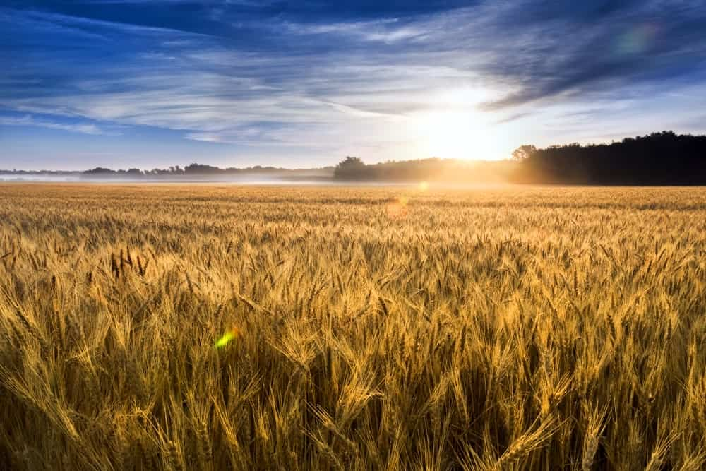 Kansas Agriculture