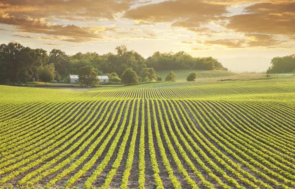 Minnesota Agriculture
