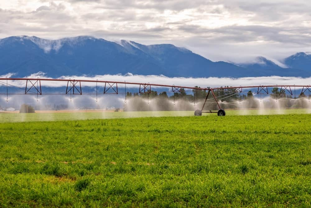 Montana Agriculture